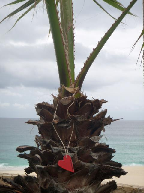 palm tree in Los Cabos