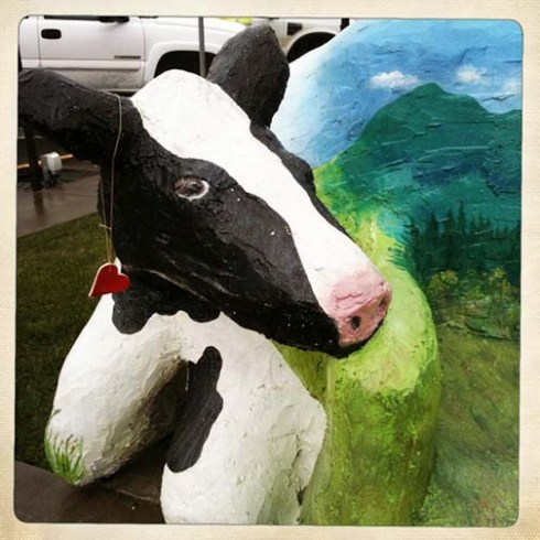 Tillamook personality cow